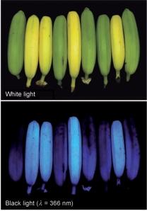 Banana luminescence from Moser et al. 2008