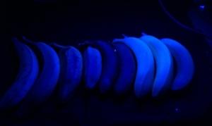 Try 3: bananas under UV light.