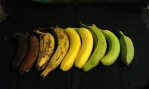 Try 2: Bananas under white light.